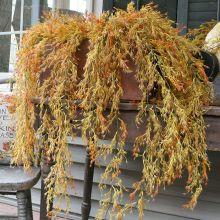 Decorative Hanging Avena Bud Bush