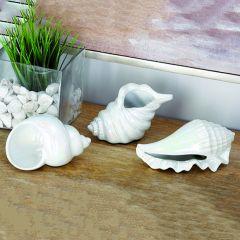 Porcelain Shells Set of 3