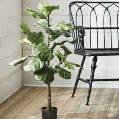 Fiddle Leaf Fig Tree in Pot 36 Inch