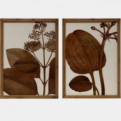 Wood Framed Botanical Image Wall Decor Set of 2