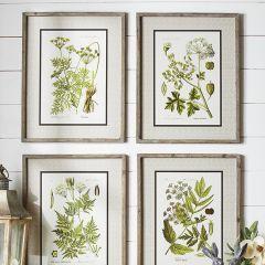 Wood Framed Botanical Print Collection Set of 4