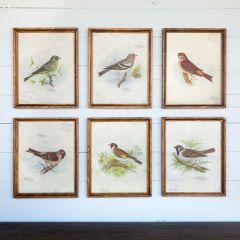 Framed Vintage Bird Prints Set of 6