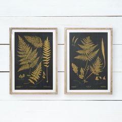 Botanical Framed Fern Print