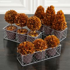 Preserved Boxwood Potted Trees In Tray 4 Pieces