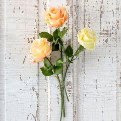 3 Stem Assorted Garden Rose Bundle