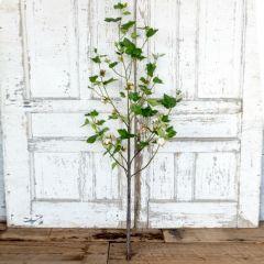 Cotton Plant Stem