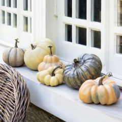 French Pumpkin Collection Set of 6