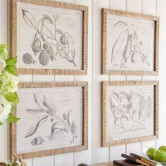 Sketch Style Framed Botanical Prints Print 4