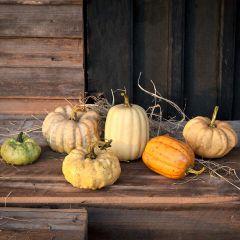 Colorful Pumpkin Harvest Set of 6