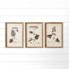 Minimalist Framed Botanical Prints Set of 3