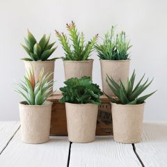 Faux Succulents in Paper Pots Set of 6