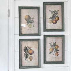 Framed Citrus Prints Set of 4