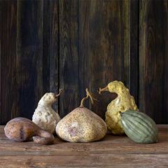 Moonlight Gourd Collection Set of 5