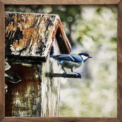 Birdhouse Framed Wall Art