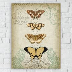Butterfly Study I Canvas Wall Art
