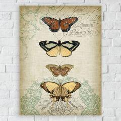 Butterfly Study II Canvas Wall Art