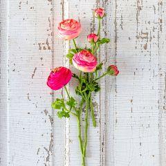 Summer Ranunculus Bundle Set of 3
