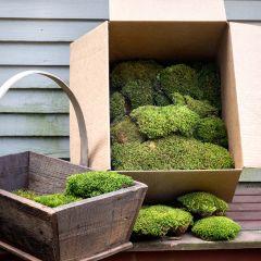 Mood Moss Box 1.75 Cubic Feet