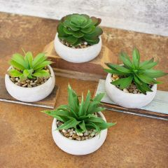Cement Potted Succulent Collection Set of 4