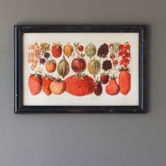 Framed Botanical Berry Art