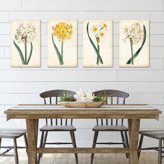 Daffodil Canvas Wall Art