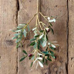 Decorative Spanish Olive Stem