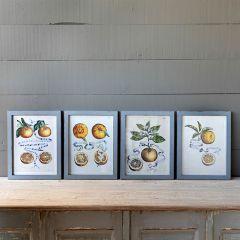 Framed Citrus And Ribbon Prints Set of 4