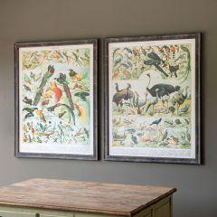Vintage Inspired French Bird Prints Set of 2