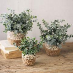 Faux Eucalyptus Plant In Woven Pot Set of 3