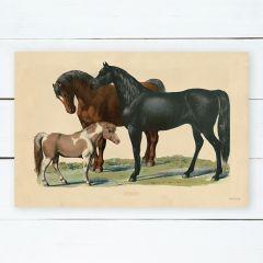 Vintage Horses Farmhouse Wall Art