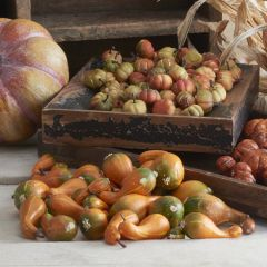 Bag of 24 Green and Orange Fall Gourds