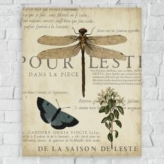 Insect and Botanical Study Canvas Wall Art
