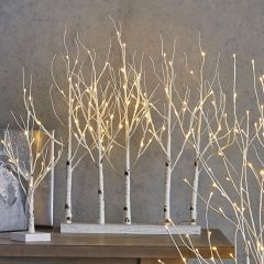 Lighted Birch Grove