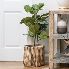 Potted Fiddle Fig Leaf Plant