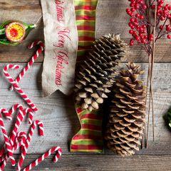 Sugar Pine Cone Bundle
