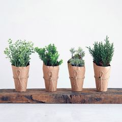 Wrapped Artificial Potted Herbs, Set of 4